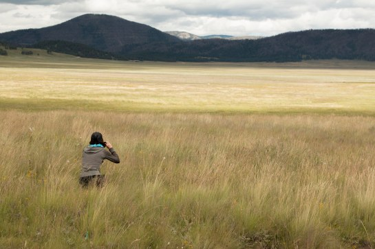 Michelle stalks her prey: subtle videos of grass blowing on the prairie.